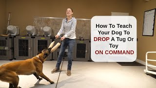 How To Teach Your Dog To Drop A Tug Or Toy On Command