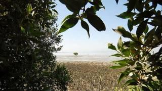 NEW Bandari song from Qeshm island - Iran, Hormozgan
