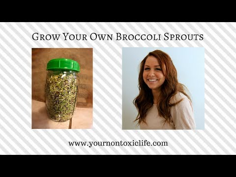 How to Grow Organic Broccoli Sprouts in a Mason Jar