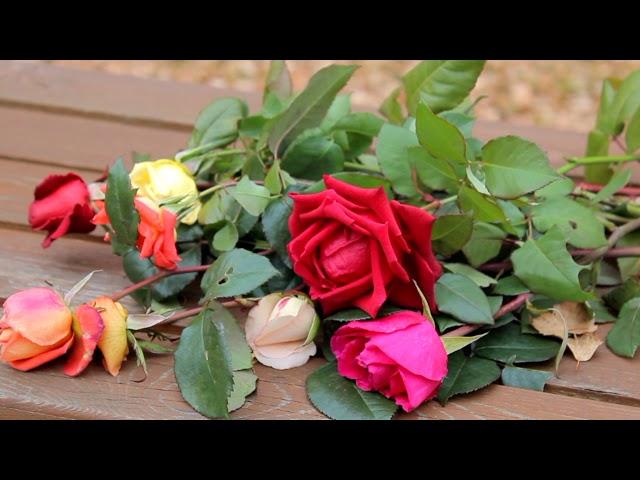 Изображение предпросмотра прочтения – ТатьянаЧерных читает произведение «Как хороши, как свежи были розы ...» И.С.Тургенева