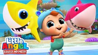 Download lagu Baby Shark duu duu | Lagu Anak - Bayi Hiu | Little Angel Bahasa Indonesia