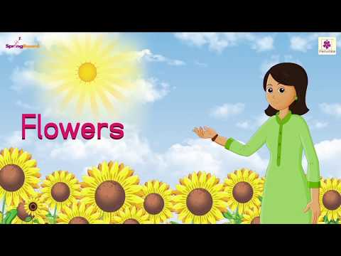Flowers Nursery Rhyme For Children | Kids Songs | Baby Rhymes by Periwinkle