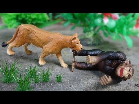 Câu chuyện về tình bạn giữa các con vật FMC B1062T