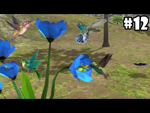 Ultimate Bird Simulator - Life of Hummingbird - Android/iOS - Gameplay Part 12