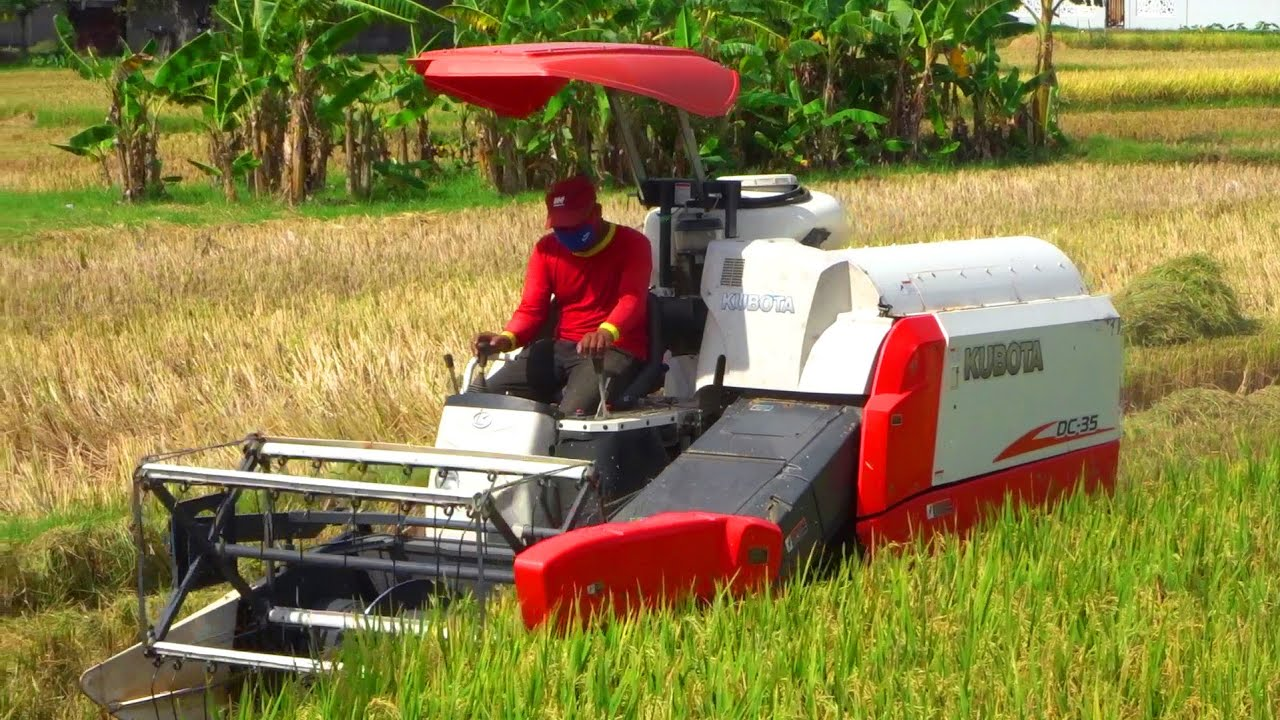 Download Combine Harvester Kubota DC-35 Harvesting Rice on a Large rice field