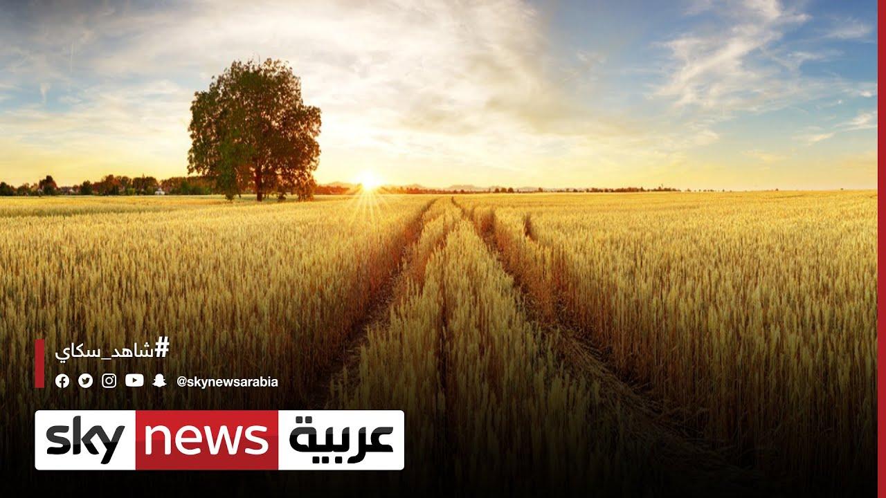 ارتفاع أسعار القمح ..وفاتورة الغذاء العالمي في تصاعد | #الاقتصاد  - نشر قبل 20 ساعة