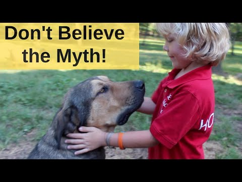 The Biggest MYTH About Livestock Guardian Dogs.