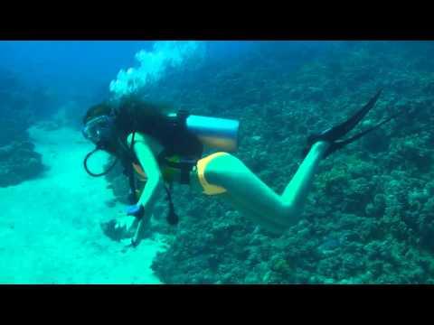 Scuba Diving - y Scuba Girl