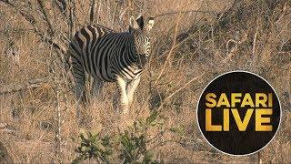 safariLIVE - Sunset Safari - August 20, 2018