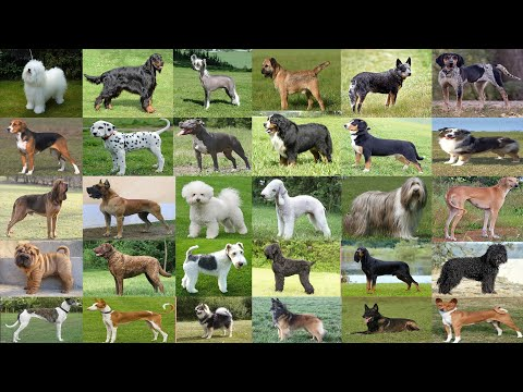 Top 120 types of Dogs and neme ( A to Z Dog )