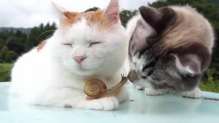 Tierische Freunde - Katze und Schnecke