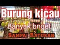 Macam Macam Burung Kicau  Mp3 - Mp4 Download