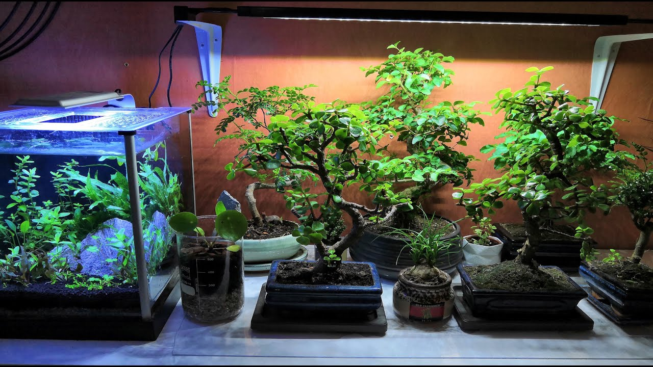 Indoor Bonsai Setup How I Care For My Indoor Bonsai Trees Youtube