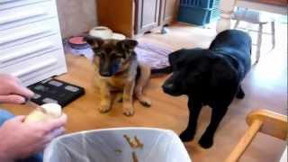 Собака с отличной реакцией - Good training for a dog