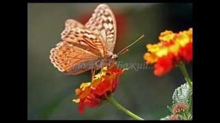 Урок бабочки.mpeg