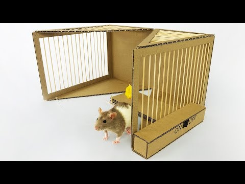 Thumbnail: DIY Simple Rat Trap from Cardboard