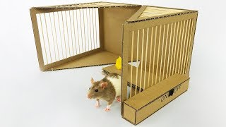 DIY Simple Rat Trap from Cardboard Video
