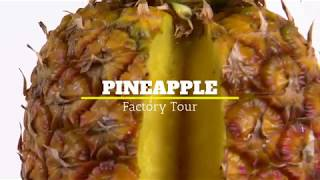 Pineapple Tour