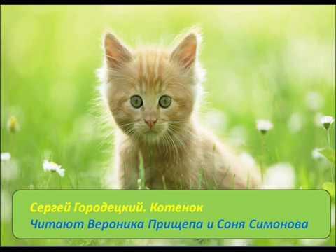 Изображение предпросмотра прочтения – «Настроение» читает произведение «Котенок» С.М.Городецкого