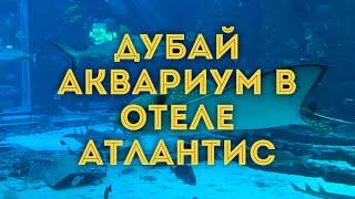 VLOG Дубай Обзор аквариума Lost Chamber отель Атлантис