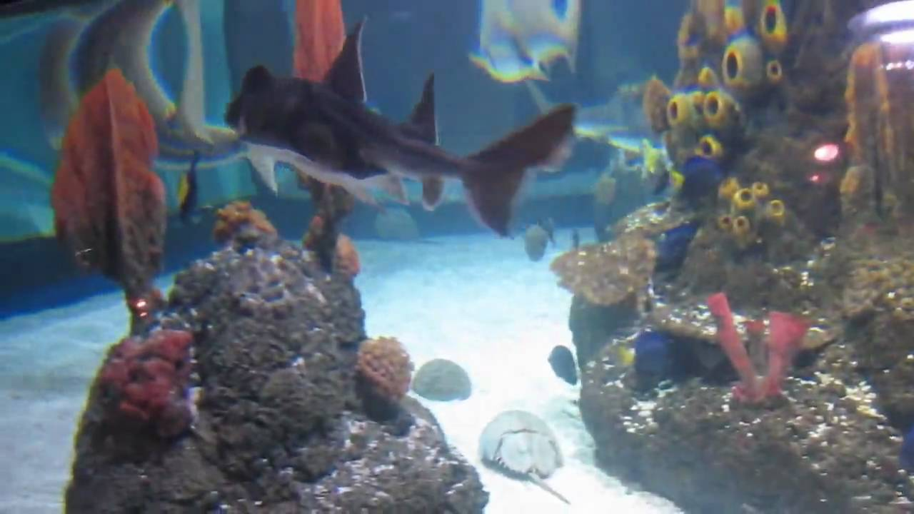 HD? Sea Life Centre Porto, Portugal - 2 - YouTube