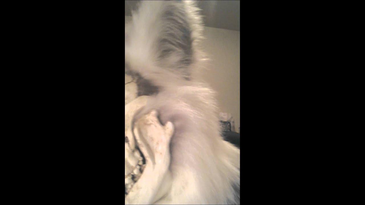 Skull Canine Fursuit Head