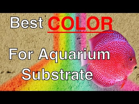 The Best Color For Aquarium Substrate