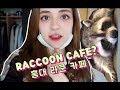 라쿤카페에 다녀왔어요! Visiting a Raccoon Cafe in Korea! VLOG