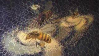 Tori Amos: The Beekeeper