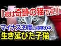 「彼は奇跡の猫です!」マイナス39度の極寒の中、生き延びた子猫