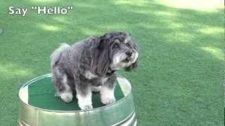 Jasmine's Dog Trick Resume