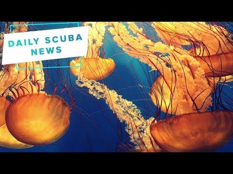 Daily Scuba News - Jellyfish Skin