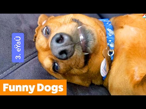 Silly Dog Bloopers & Reactions   Funny Pet Videos