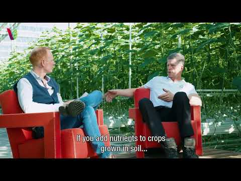 Sustainable Series #3 – Sustainably Grown Greenhouse Vegetables