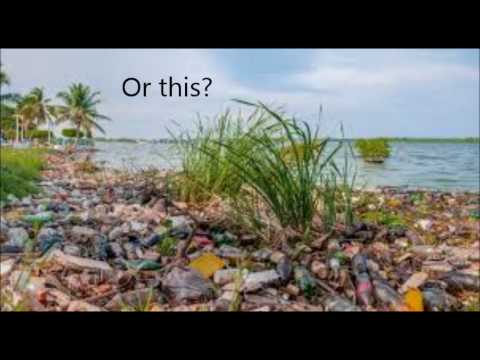 Why not to litter or pollute the earth