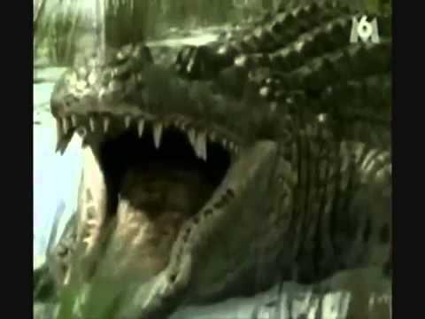 Sarcosuchus vs Deinosuchus