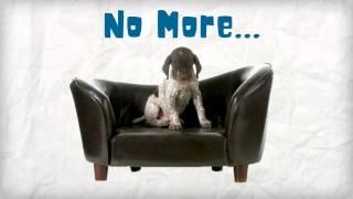 Dog Training Secret - Stop Your Dog's Behavior Problems