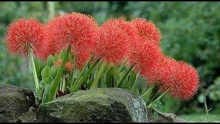 [Binh Bonsai] Cách trồng hoa Hồng tú cầu cực đẹp - Những đồ dùng và công dụng ban đầu trồng Hoa