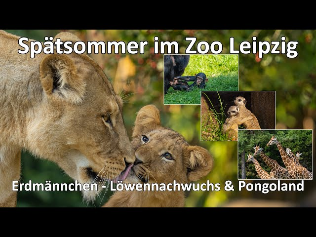 Spätsommer im Zoo Leipzig - Wenn es langsam Herbst wird im Zoo - Sony ZV-E10 - A6600 - SEL200-600G