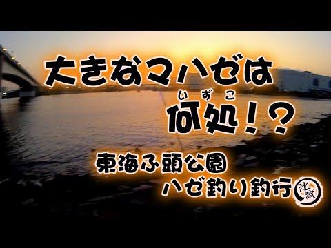 東海埠頭公園 ハゼ釣り釣行…2017/10/10