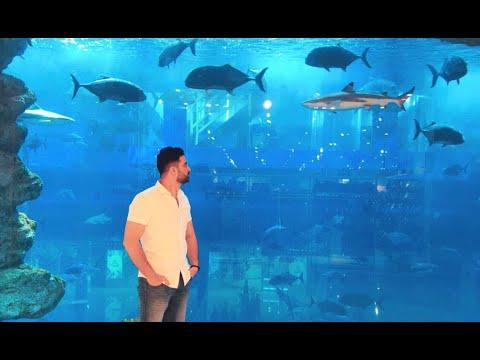 Dubai Aquarium & Underwater Zoo | World Biggest Aquarium | Dubai Mall