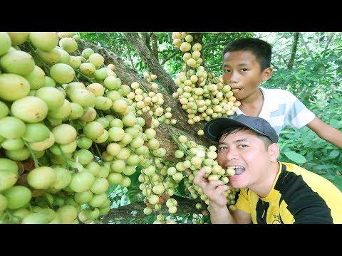 Ăn Trái Dâu Rừng Cực Phê | Hương Sơn Green