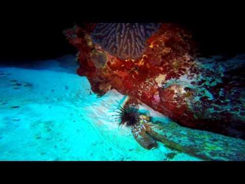 Cayman Dive Trip 2016