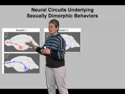 Catherine Dulac (Harvard Univ) Part 3:Sex-Specificity of Pheromone Responses