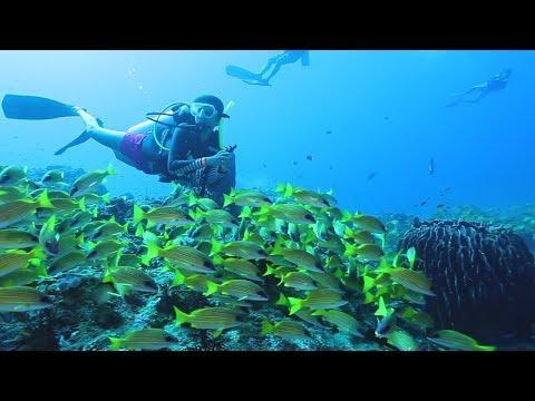 PADI - Diving in India