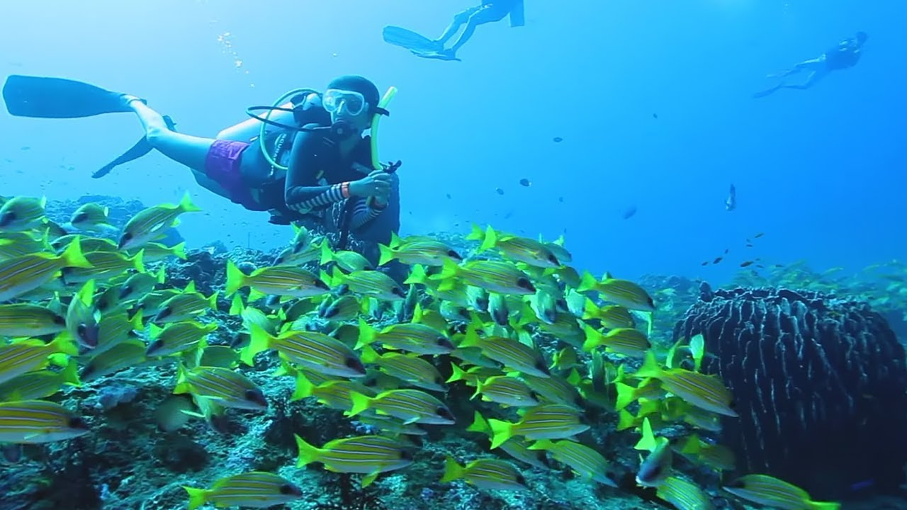 Everything You Need to Know About PADI