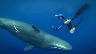 Feeling The Force of Sperm Whales Ultrasound | Super Giant Animals | BBC