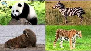 Учим животных мира. Развивающее видео для детей