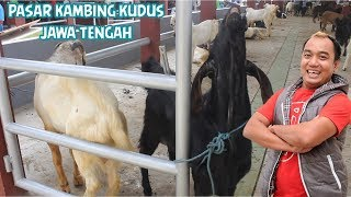 Download Video PASAR KAMBING KUDUS JAWA TENGAH MP3 3GP MP4