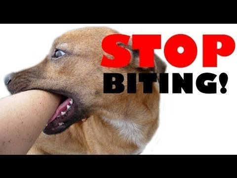 how-to-train-your-puppy-not-to-bite